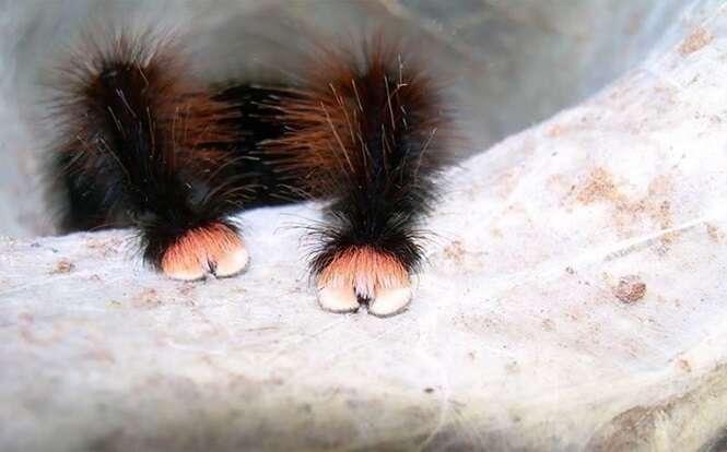 Estas imagens podem mudar a maneira como você enxerga as aranhas