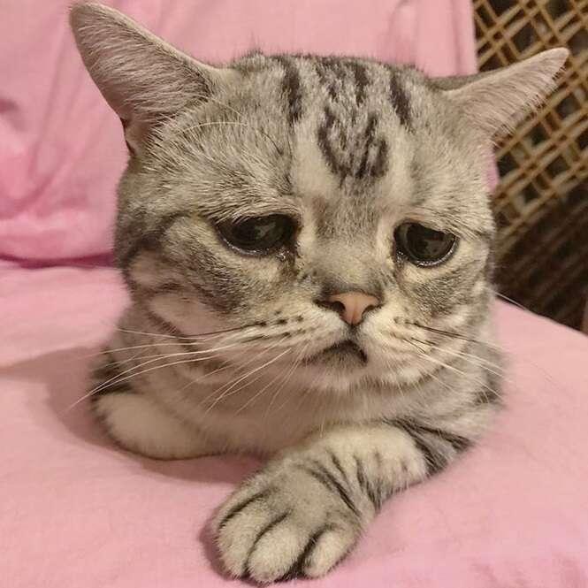 Conheça Luhu, o gato que tem uma das caras mais tristes que você já viu