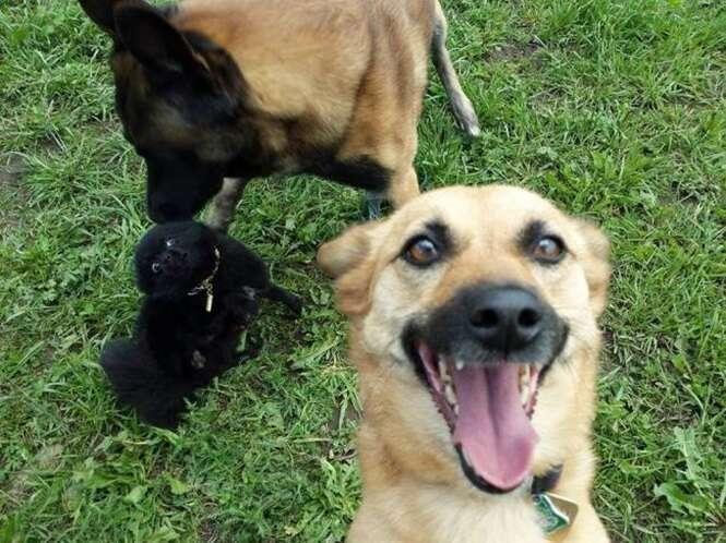 Cães que fazem selfies melhor que você