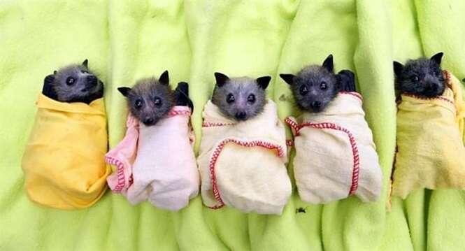 Imagens mostrando o quanto morcegos são adoráveis