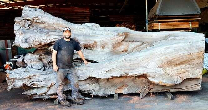 Artista transforma madeira em incrível escultura de polvo