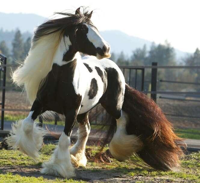 Cavalos de bigode que vão tornar o seu dia bem melhor