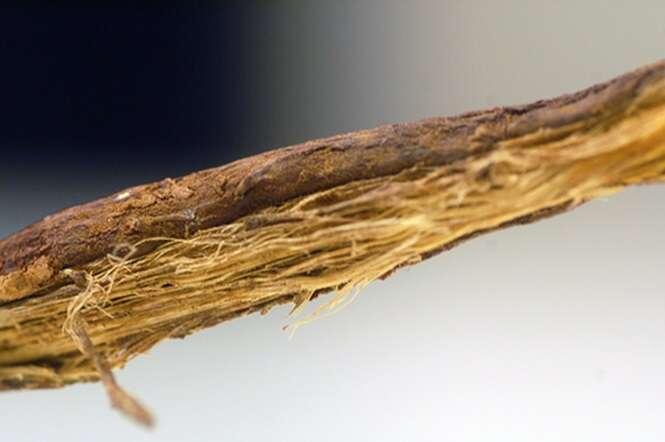 Remédios naturais capazes de acabar com a rinite alérgica