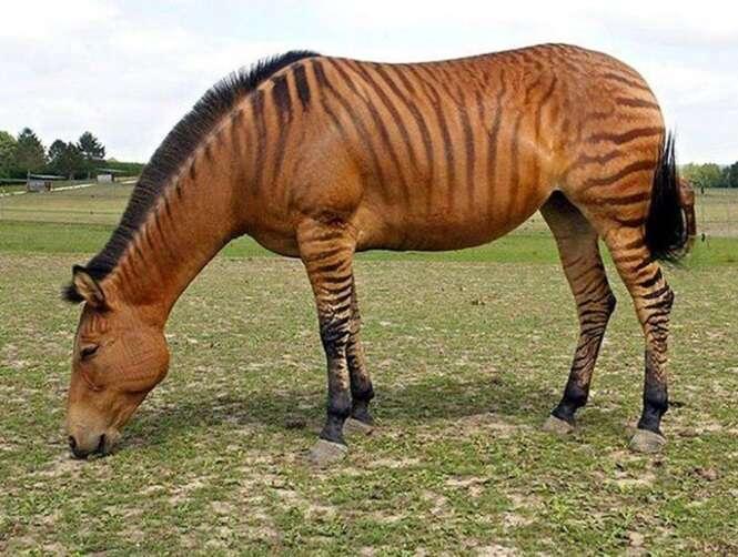 Animais híbridos que você não sabia que existiam