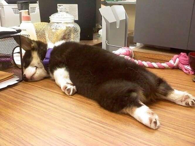 Cães que tiveram um dia cansativo demais