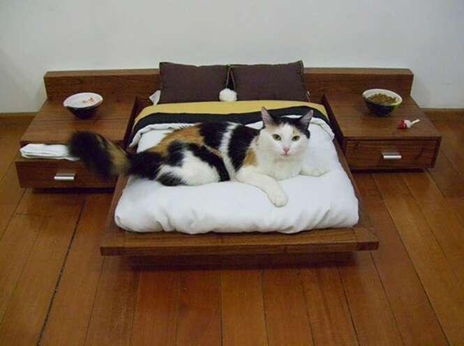 Gatos que levam uma vida melhor que a sua