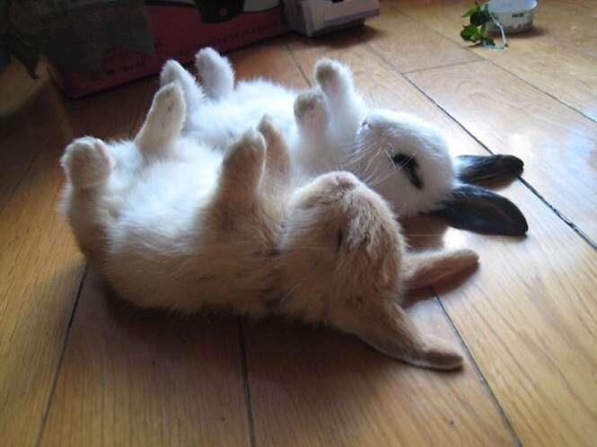 Fotos de coelhos super fofos