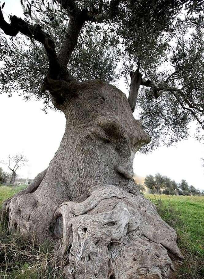 Árvores que parecem tudo, menos árvores