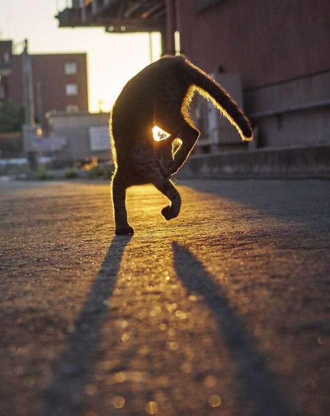 Gatos que dominaram a antiga arte marcial dos ninjas