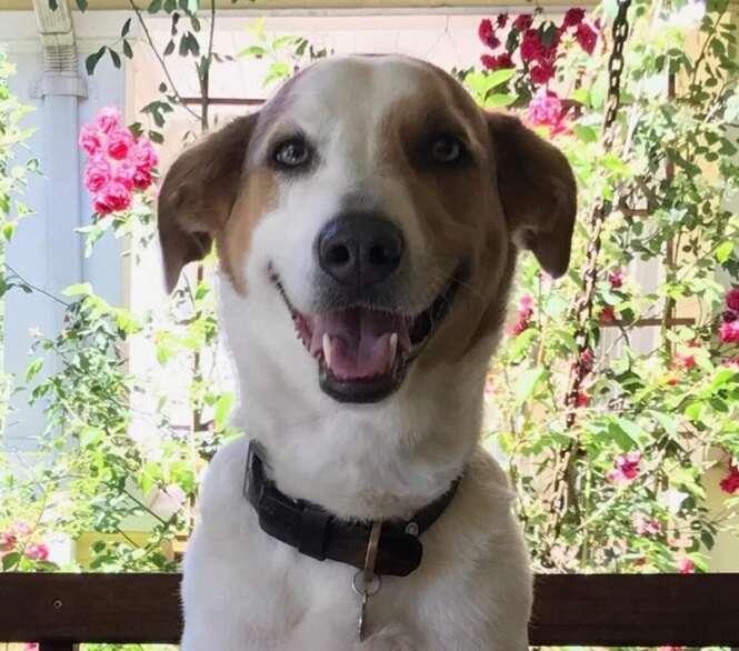 Fotos de cães super felizes para melhorar o seu dia