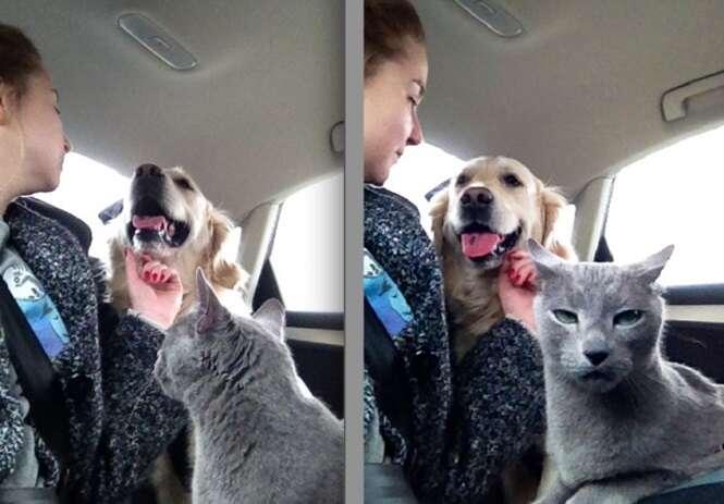 Fotos hilárias de cães e gatos que vivem na mesma casa