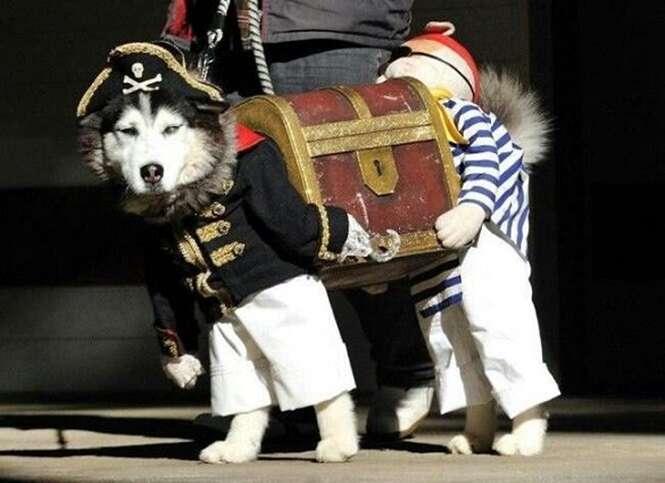 Cachorros que foram sensação no Dia das Bruxas