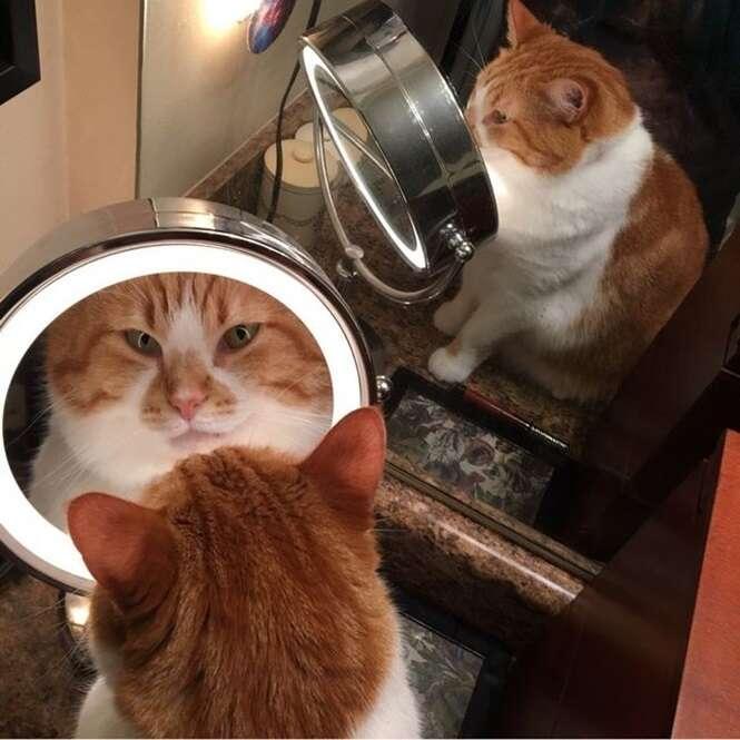 Fotos mostrando por que a Internet é apaixona por gatos