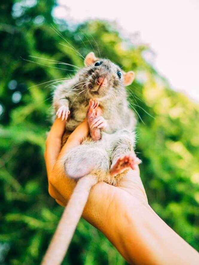 As reações de ratos ao saíram do laboratório pela primeira vez
