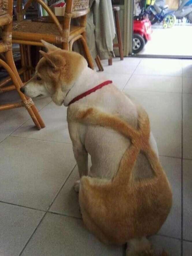 Cães que precisarão de um psicólogo após suas tosas