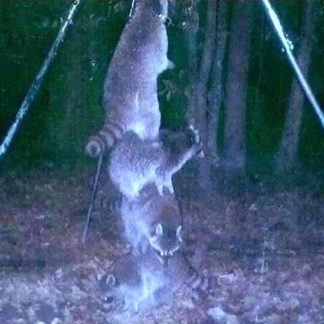 Imagens mostrando a louca vida de animais selvagens a noite