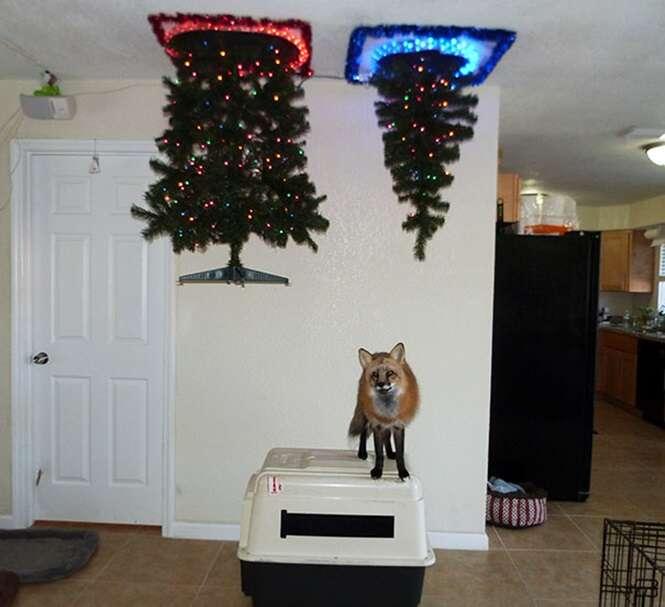 Pessoas que encontraram formas geniais de protegerem suas árvores de Natal dos pets