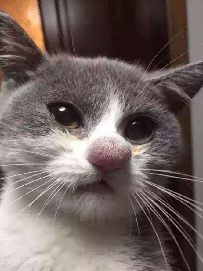 Gatos que sofreram picadas de abelhas ou marimbondos