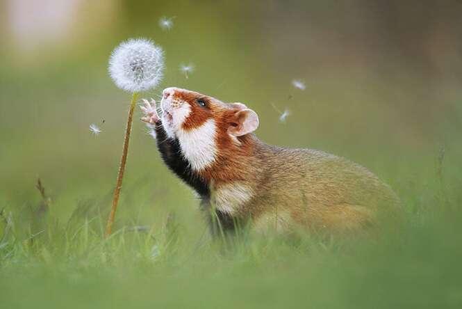 Hamsters que vão melhorar o seu dia