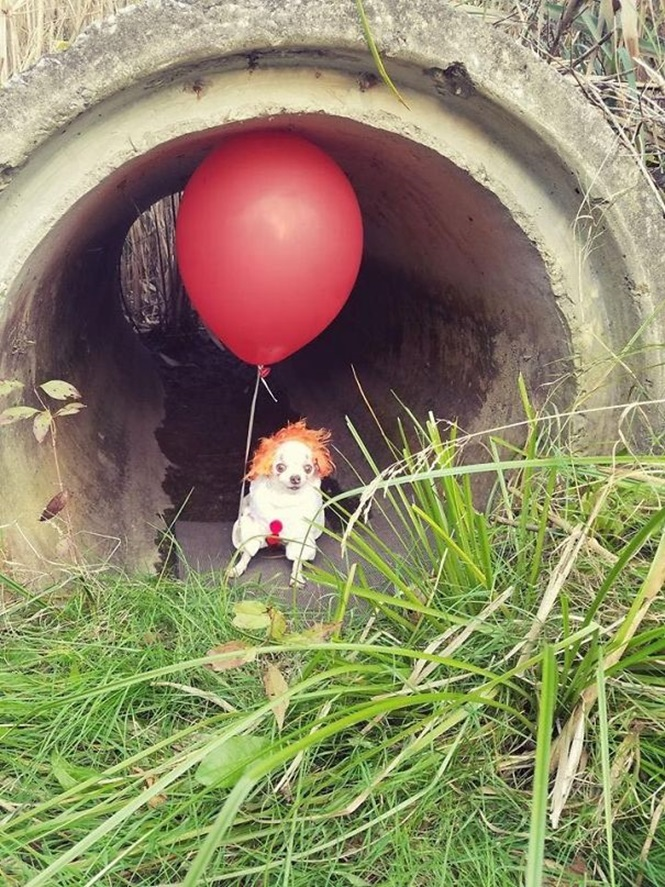 Cães criativamente fantasiados para o Dia das Bruxas