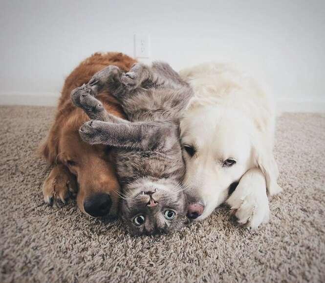 Conheça estes 3 melhores amigos. Eles amam fazer coisas juntos