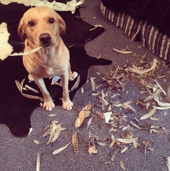 Cães que com certeza são inocentes do que foram acusados