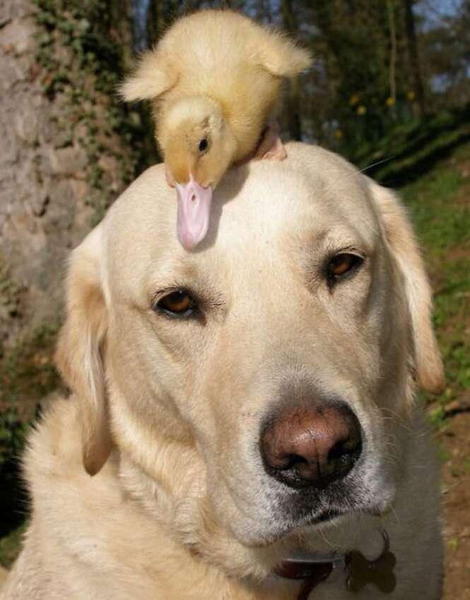Imagens mostrando que quando o assunto é amizade a espécie não importa