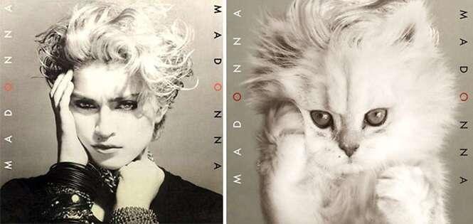 Alguém está inserindo gatos em capas de discos famosos, e os resultados são melhores que as obras originais