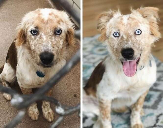 Fotos mostrando cães antes e depois de terem sido adotados