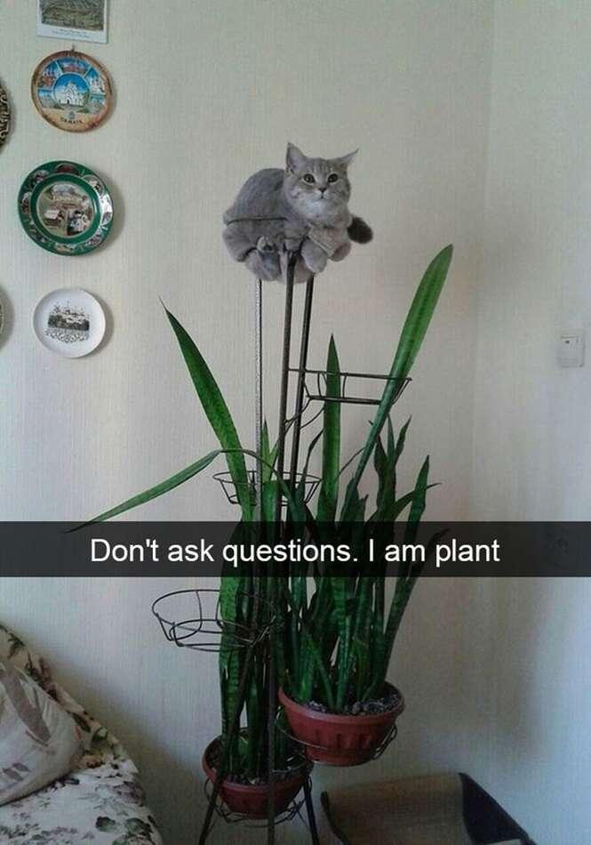 Snaps mostrando que os gatos são animais excêntricos, porém hilários