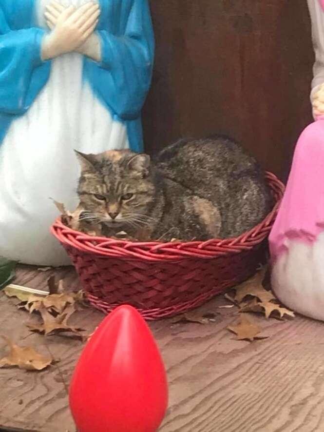 """Gato """"mal-humorado"""" rouba a cena em presépio em Nova Iorque"""