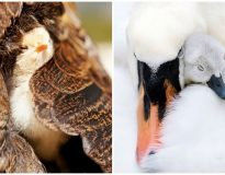 20 mamães aves dando uma aula de afeto