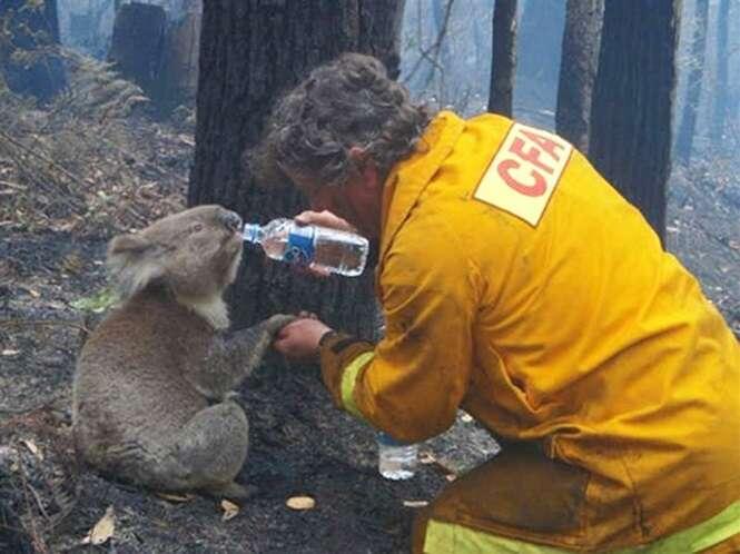 Animais que serão agradecidos aos bombeiros para sempre