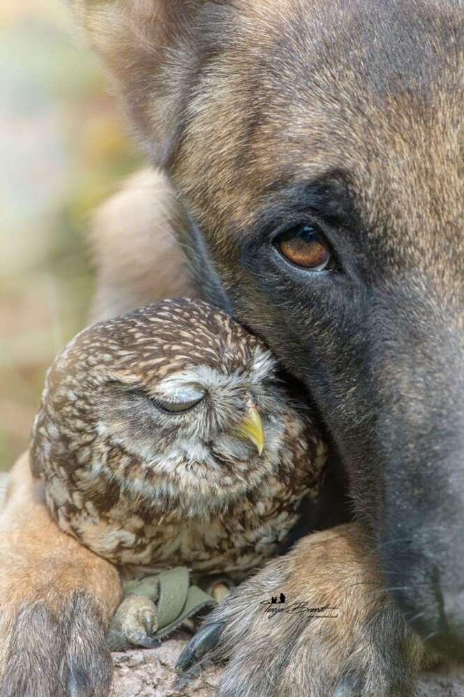 Fotos da amizade entre este cão e esta coruja serão as melhores coisas que você verá hoje