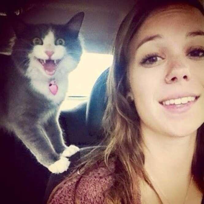 Gatos que não queriam tirar selfie