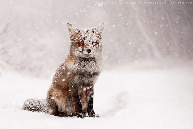 19 fotos mágicas de animais durante o inverno