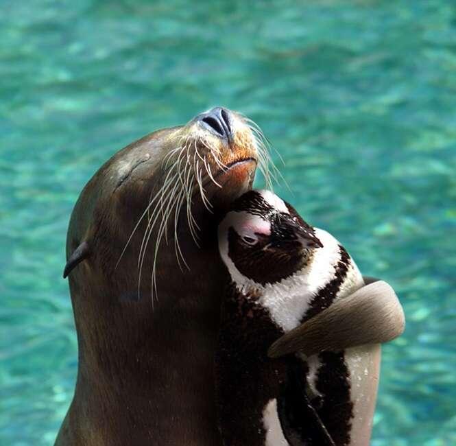 As amizades mais improváveis registradas em imagens