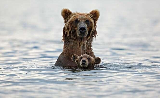Fotos de animais e seus filhotes que vão te fazer refletir sobre suas prioridades de vida