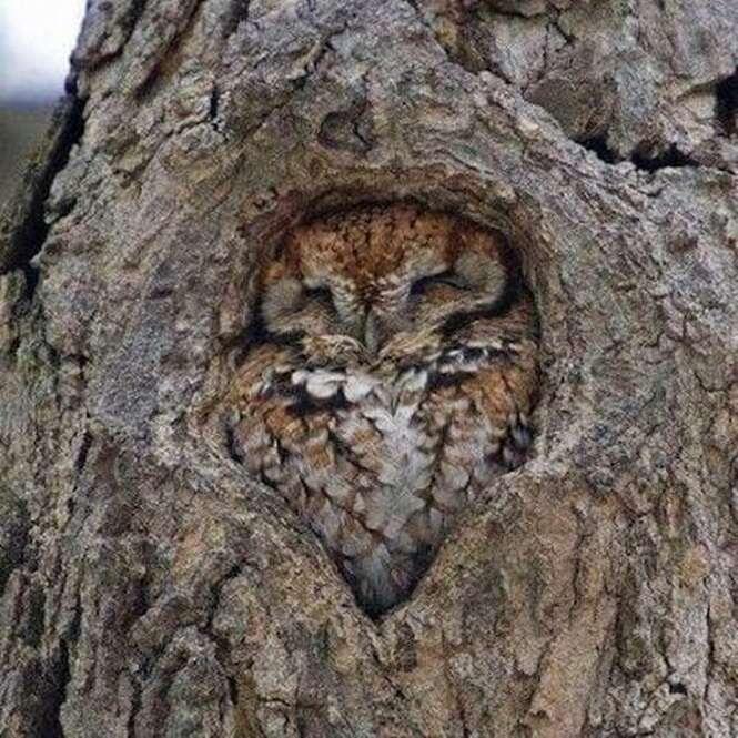 Imagens de animais que podem acalmar o coração de quem está estressado