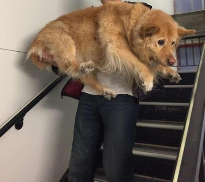 Fotos mostrando que todo cão é filhote por dentro
