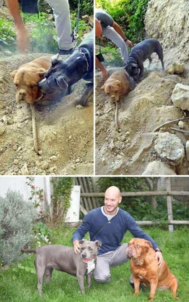 Provas de que os cães vêm ao mundo com uma missão