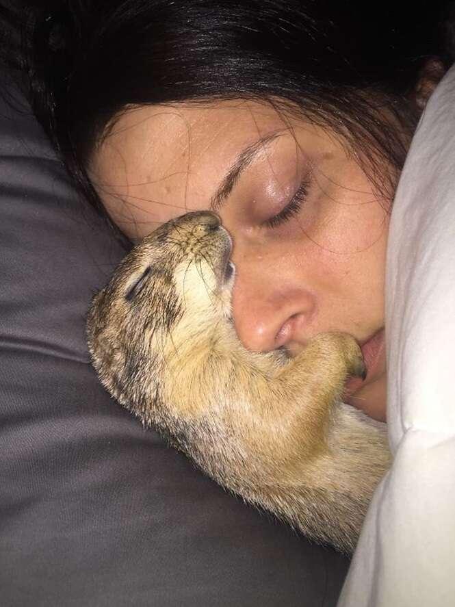 Animais sem vergonha que roubaram o (a) companheiro (a) do (a) dono (a) na cara dura