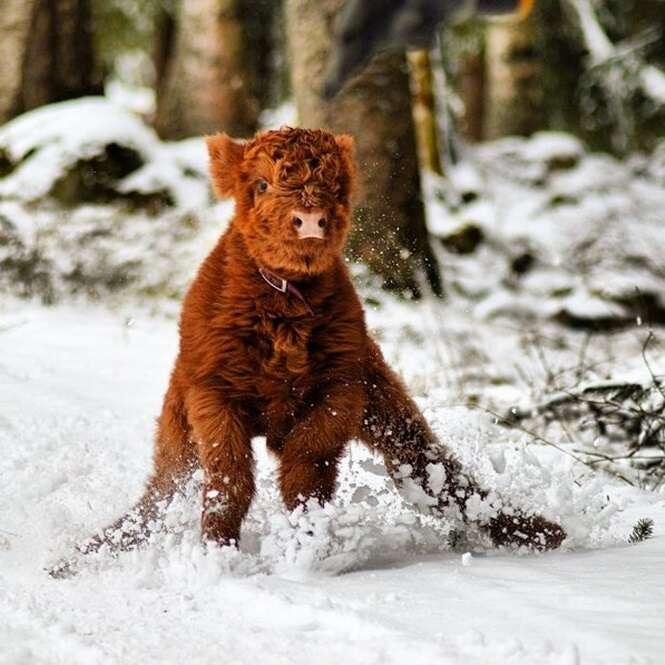Animais que ficariam bem felizes caso se mudassem para o Polo Norte hoje mesmo