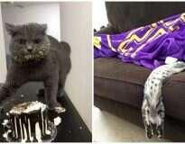10 fotos mostrando que os gatos são muito parecidos com você