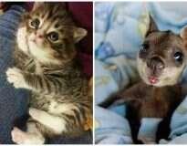 20 imagens fofas que provam que voluntários de abrigos de animais não têm tempo para ficarem entediados