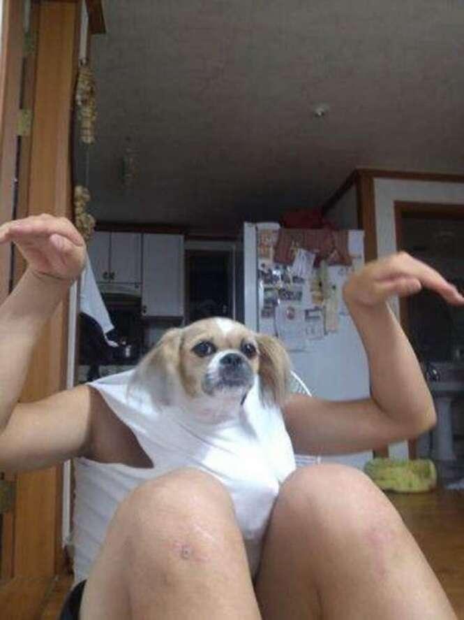 Fotos de cães tiradas no melhor momento possível