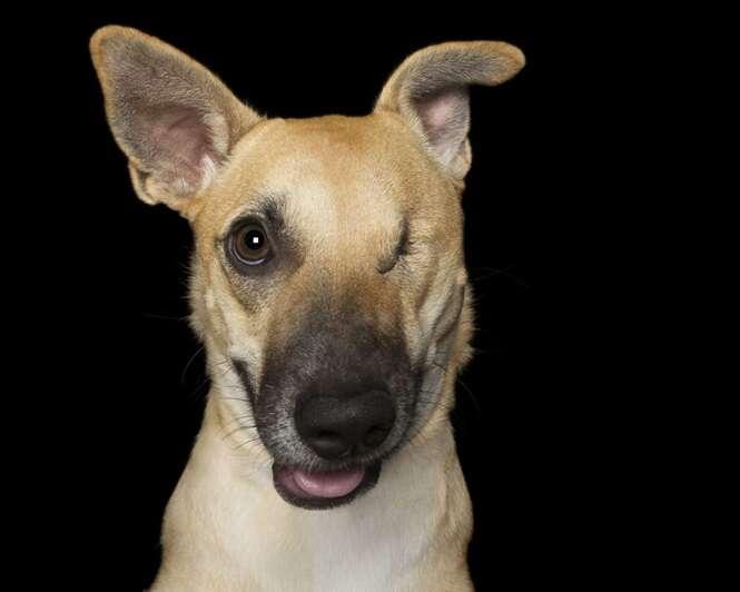 """Fotógrafo faz sessão com cães """"imperfeitos"""""""