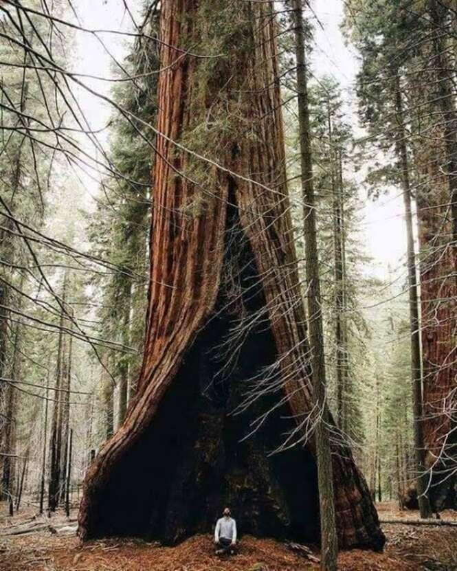 Árvores tão belas que você vai querer abraçá-las agora mesmo