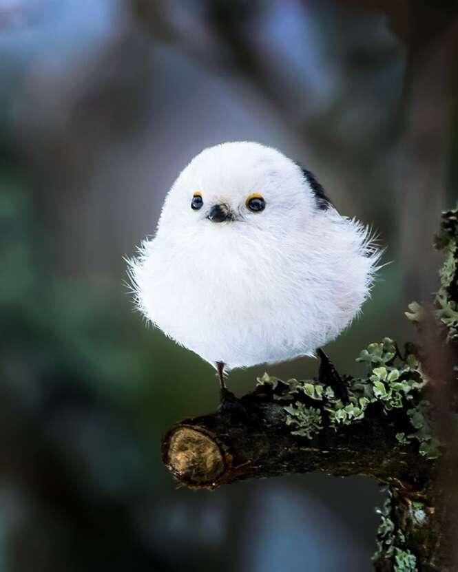 Conheça fotógrafo que registra Angry Birds do mundo real