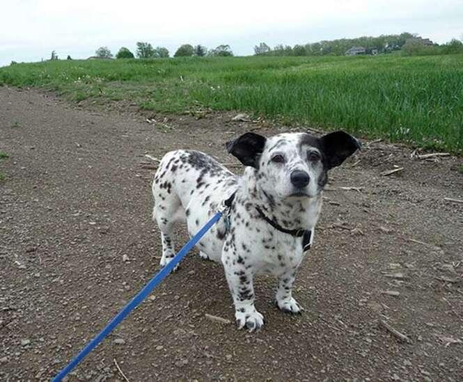 Cães mestiços pelos quais você vai se apaixonar